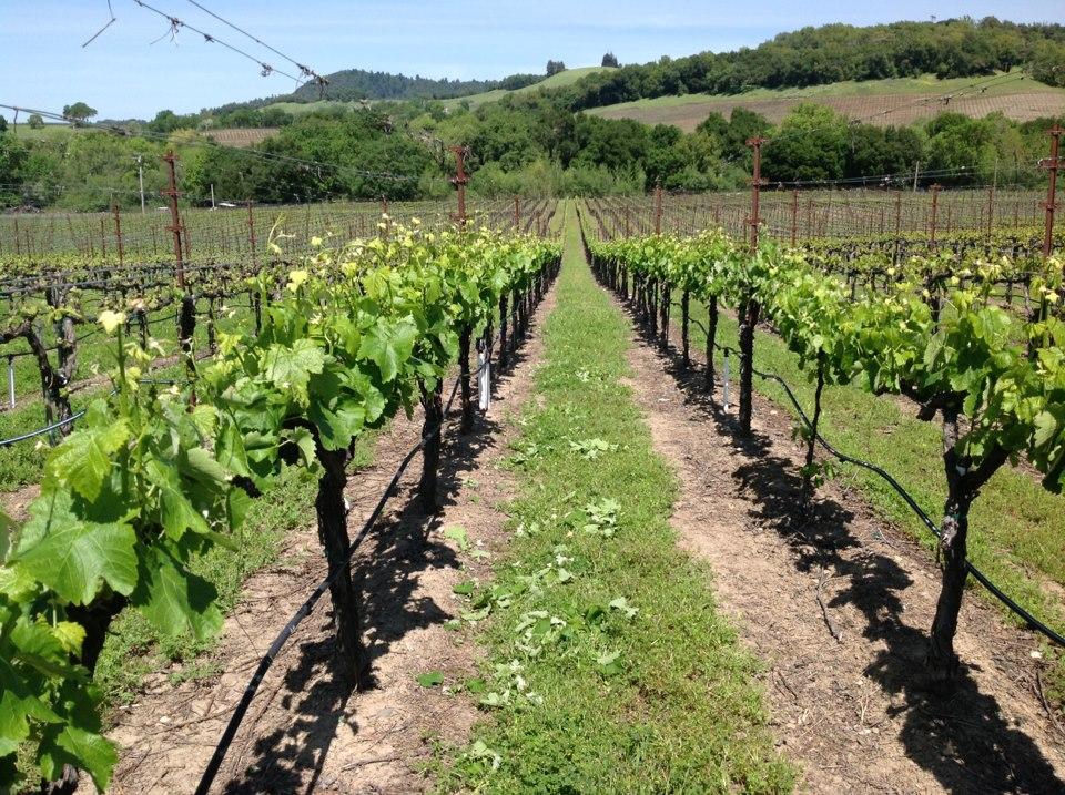Viszlay Vineayrds wine tasting in Sonoma