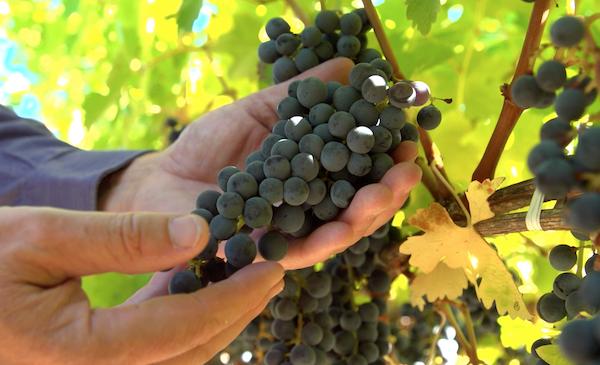 Goldschmidt Vineyards premium napa valley and sonoma wines
