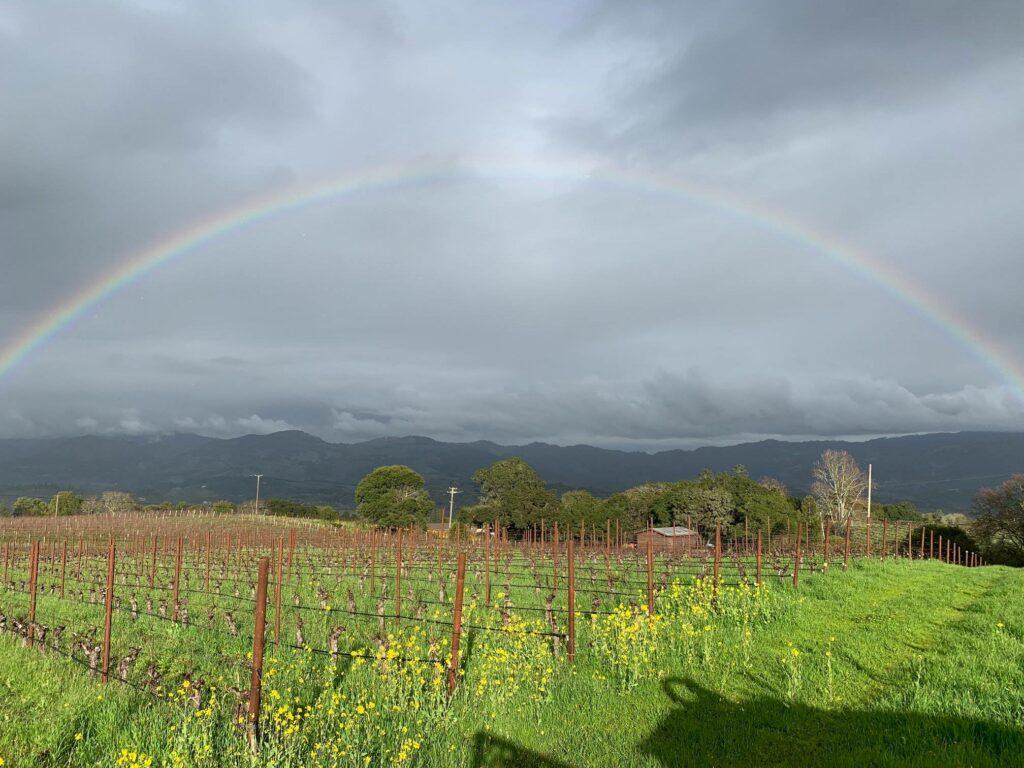 Laurel Glen organic vineyard