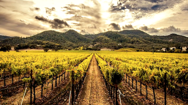 Hoopes Family Vineyard in Napa Valley