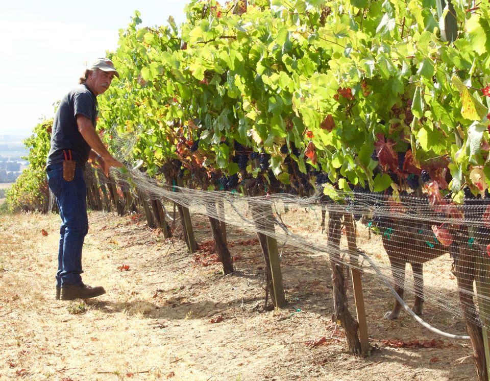 Napa Valley Pinot Noir vineyards