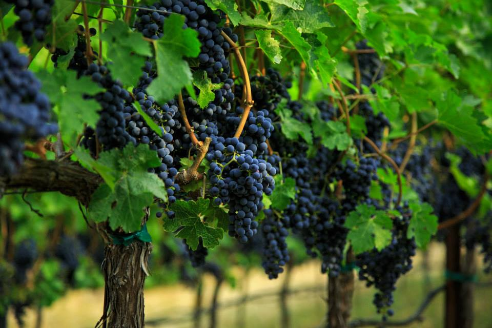 Premium Napa Valley wines from Clif Family Winery