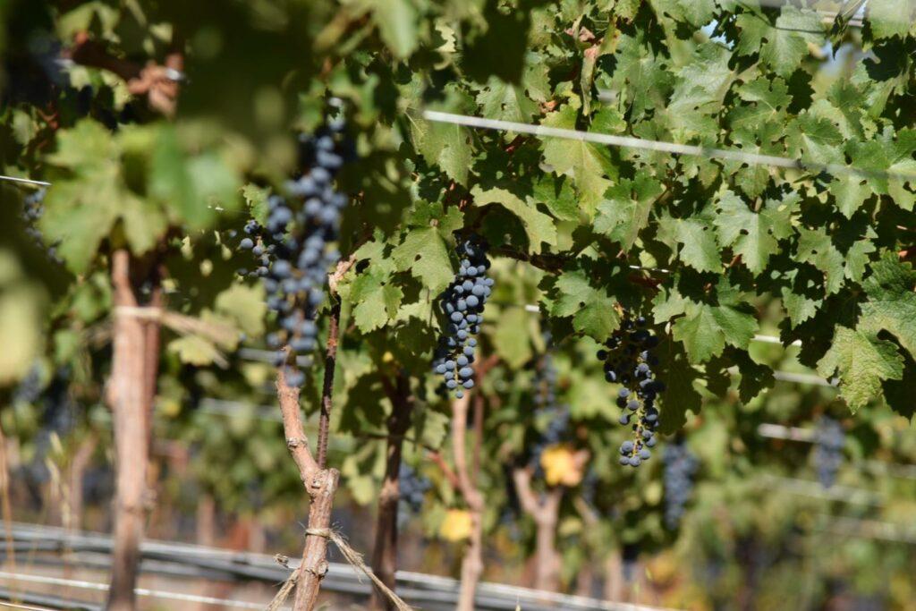 Laurel Glen Vineyards Cabernet Sauvignon