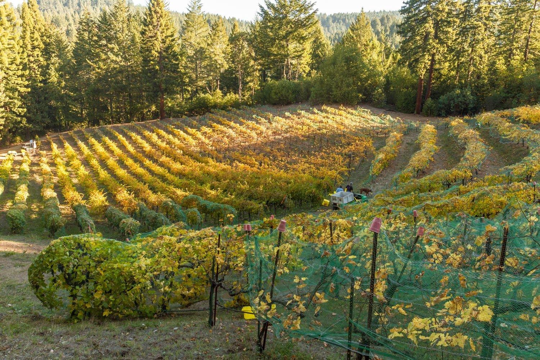 spann vineyards premium wines