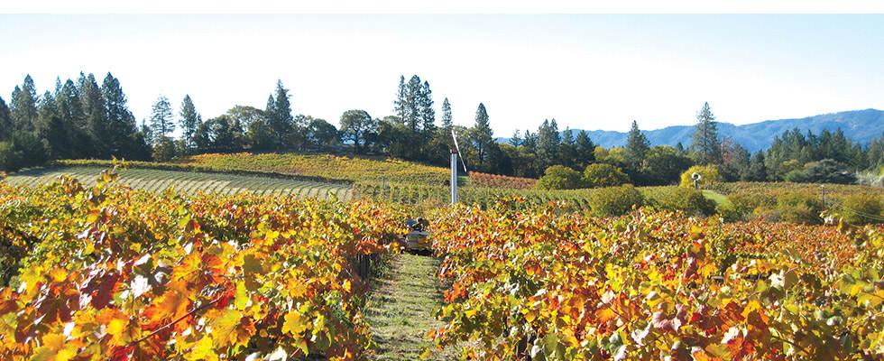 Howell Mountain Vineyard Napa Valley