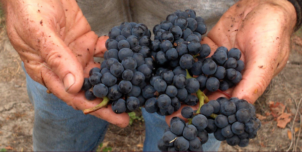 Premium Napa Valley Pinot Noir