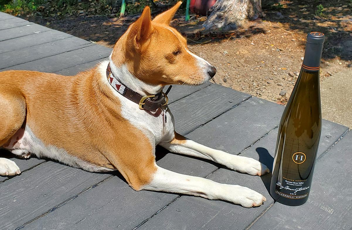 Halleck Vineyard Winery Dog Franki