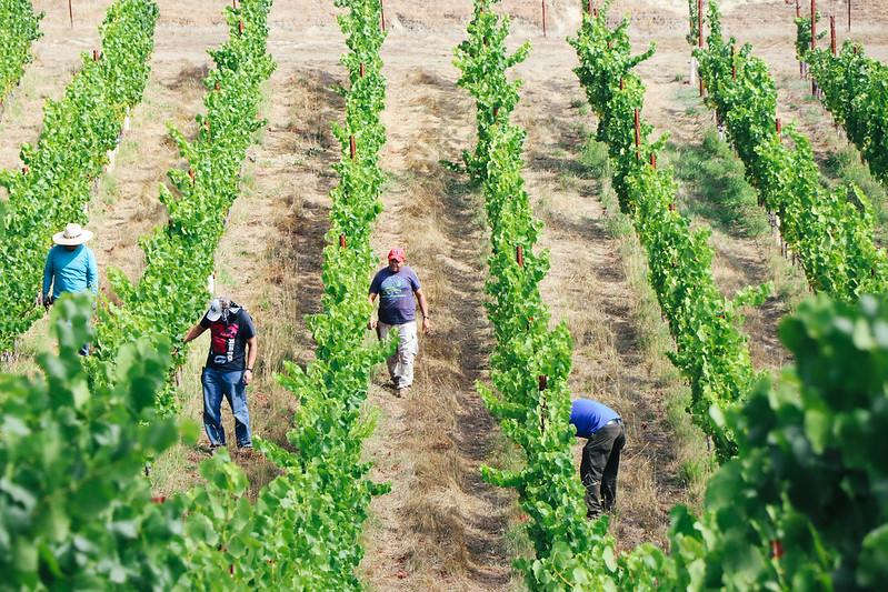 Red Car Wine vineyards sonoma coast